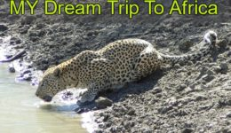 Short Story My Dream Trip To Africa